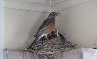 Feeding on the Nest